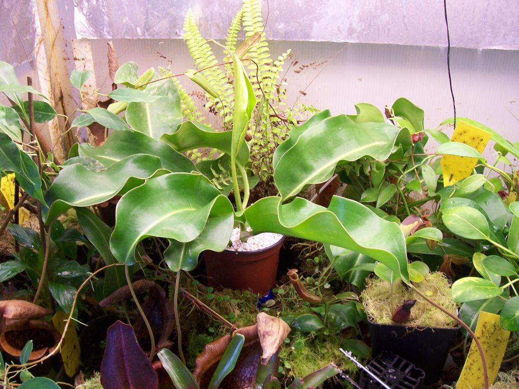 The Cuttings In My Terrarium Members Gallery Carnivorous Plants Uk