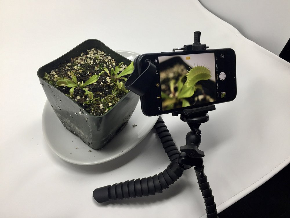 iphone_macro_plant_photography_setup_small.jpg