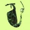Krzysio's Nepenthes - last post by gabgabinou