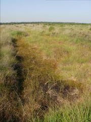 Old peat digging