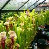 greenhouse Sm