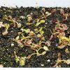 DSC 7677 Dionaea