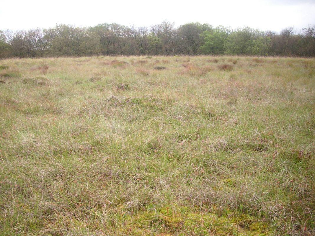 D. Rotundifolia site, Malham Tarn