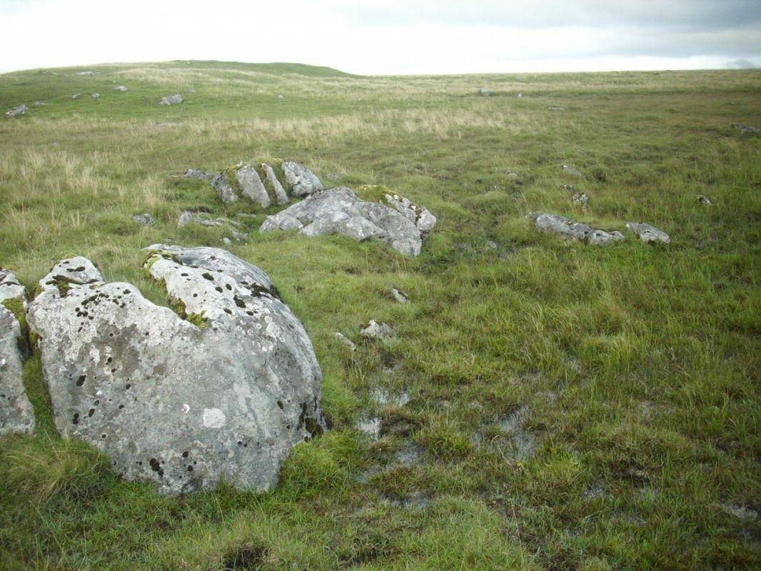 P. Vulgaris site, Malham Tarn