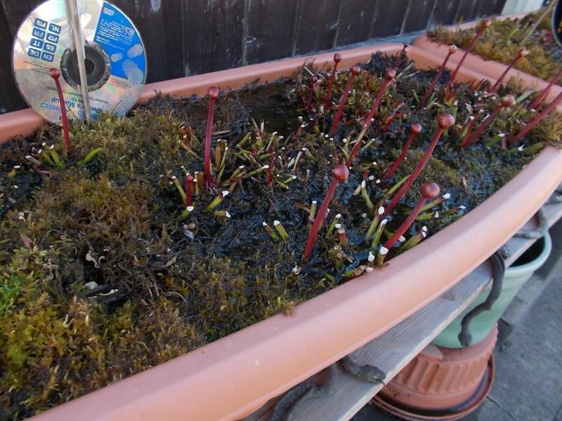 Bog Planters 3rd May 2015