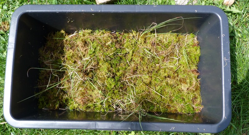 The sphagnum remnants