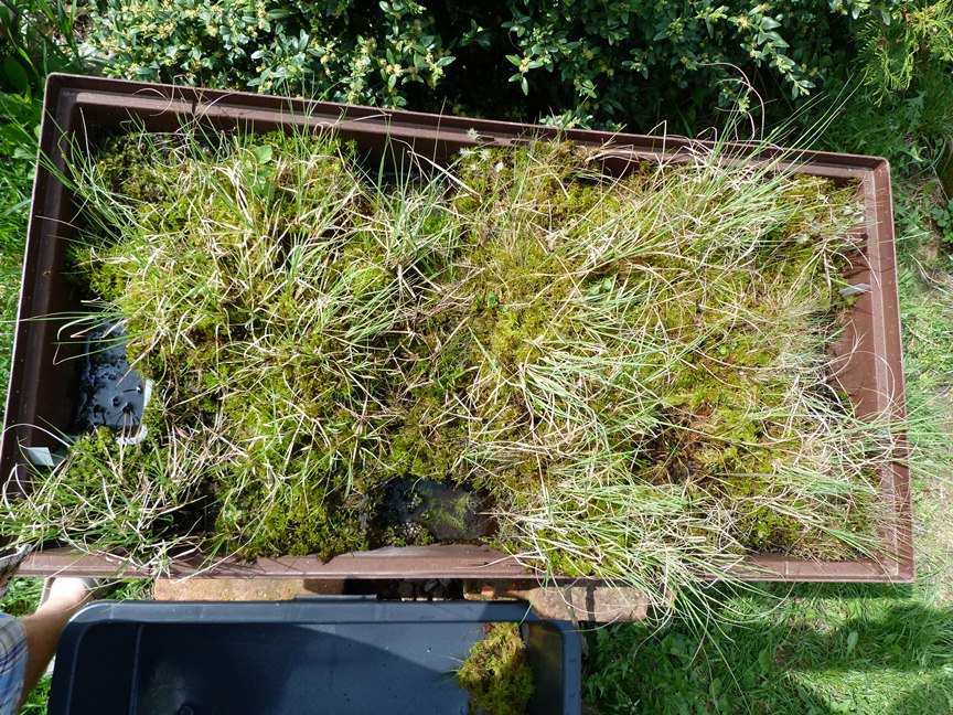 My garden bog