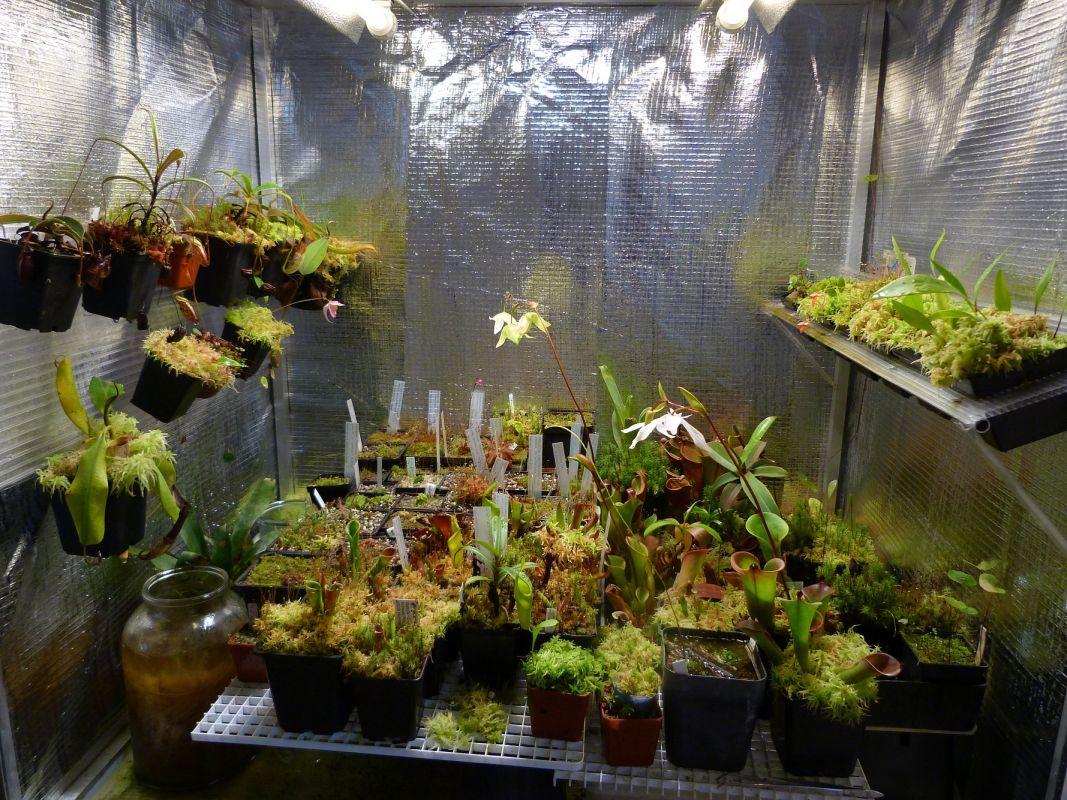 My basement terrarium