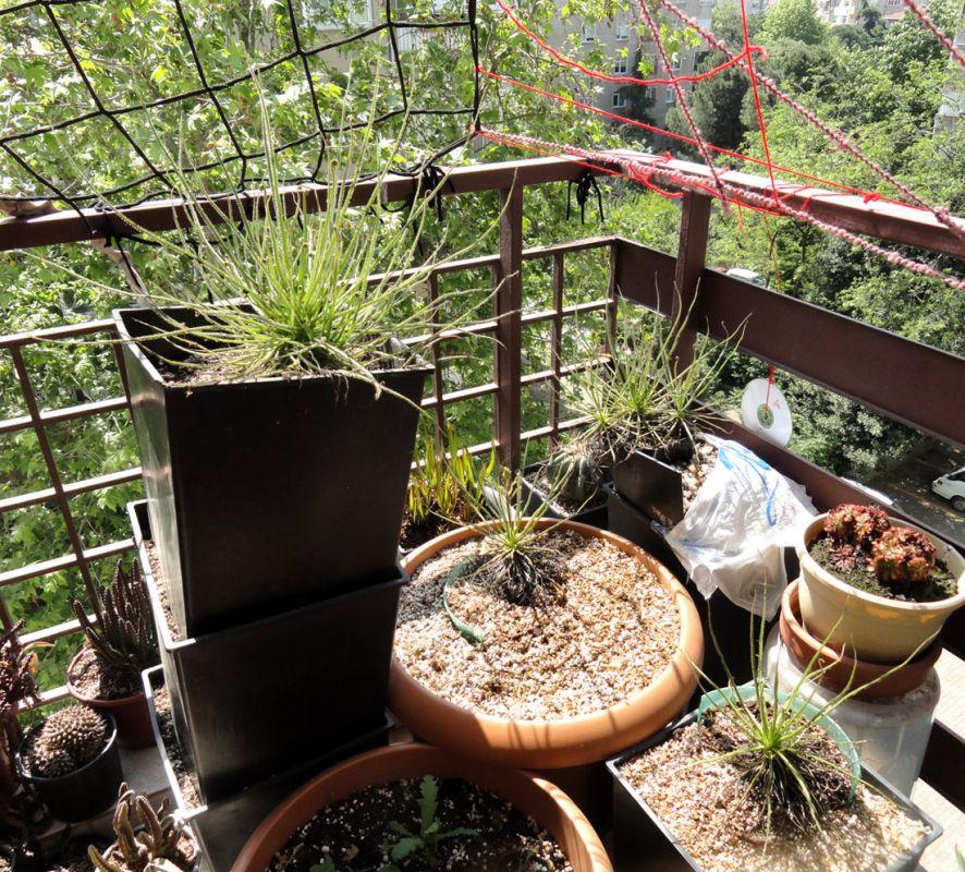 drosophyllum corner