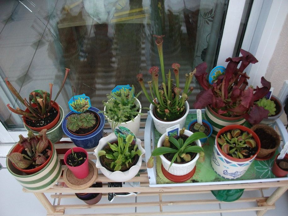 My Carnivorous Plants