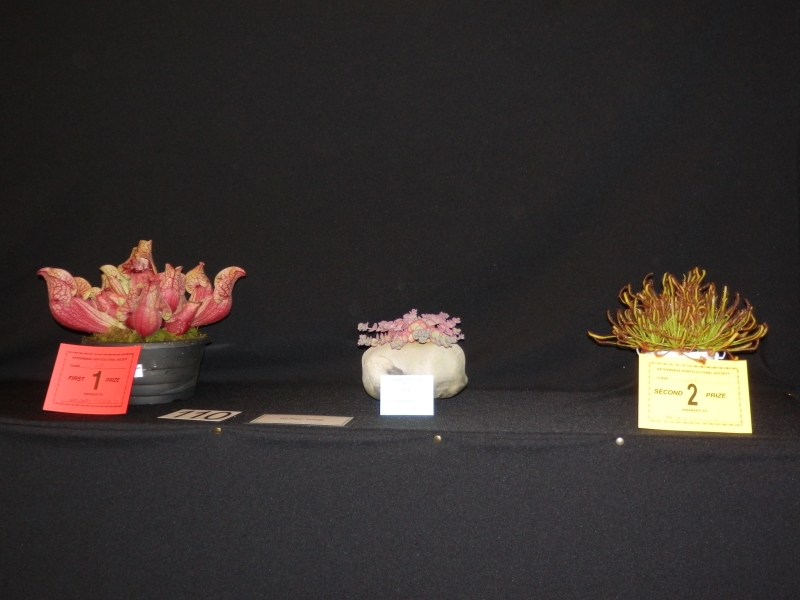 Horticulture Show 2012