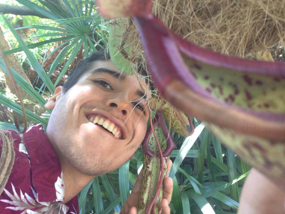 Nepenthes Miranda