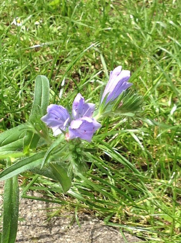 Unknown non-carnivorous flower