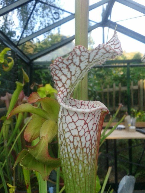 Rory's plants