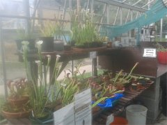 Carnivorous Plant Collection at Piccadilly Gardens Lancaster