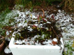 Outdoor planter in the snow