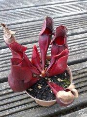 Bluedog0628's plants