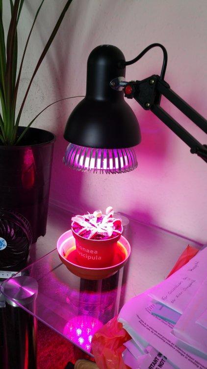 VFT light.jpg