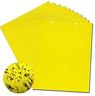 Sticky Paper.jpg
