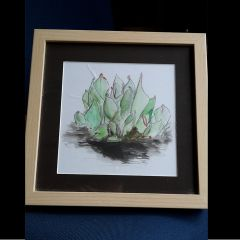 Heliamphora Drawing
