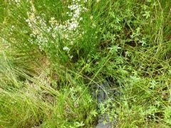 Part of the bog