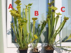 3plants Res