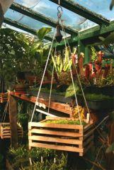 Orchid Basket.jpg