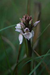 Orchid0.1.jpg