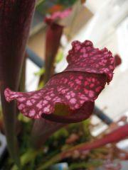 2008 plants