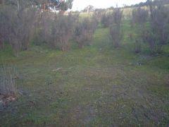 Tea-Tree Site, Behind-MEADOWVIEW-Lodge, Halls-Gap, GRAMPIANS