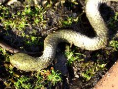 Snakes in a Bog!