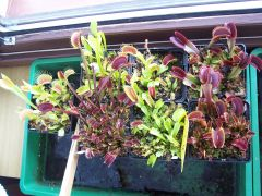 VFT for sale