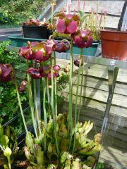 wareham flower1