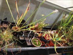 Greenhouse bench 2