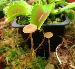 Terr2 fungus