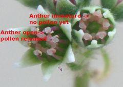 Ceph flower macro labelled3